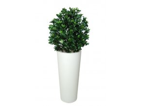 12470 osmanthus uvr bush 90 cm green 58102uvr