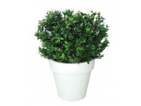20270 osmanthus uvr bush lux 90 cm green 58103uvr