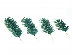Palmovy list Areca