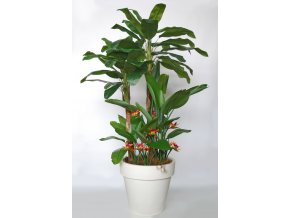 Banana Tropical Arrang 280 cm Grn Ora V5569001