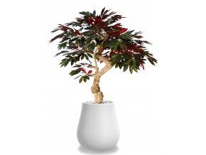 Capensia Crown 185 cm Green Red V1083000