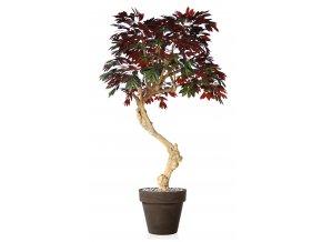 Capensia Nidra 250 cm Green Red V1083001