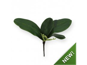 404604 orchidee bladtoef s x4
