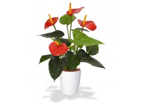 405104rdpp10 anthurium 40 rood orchid high 10 white