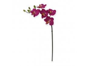 510001 mini phalaenopsis 50 paars