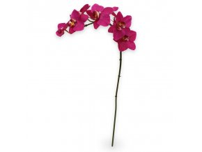 510005 phalaenopsis orchidee 80 paars