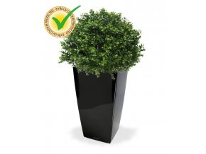 138204uv buxus ball 40 cubico 22 zwart
