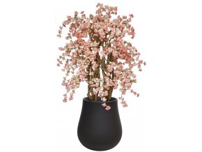 Cherry Wild Lux 235 cm Light Pink V1084L05