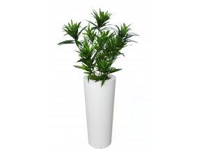 Dracaena Reflexa Bush Small 130 cm Green V4008A29