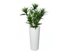 Dracaena Reflexa Bush Small 130 cm Green V4008A29