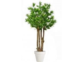 Dracaena Reflexa Exotica 280 cm Green 4008A36