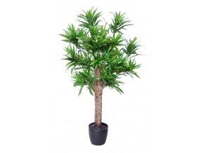 Dracaena Reflexa Plant 120 cm Green V4008A33