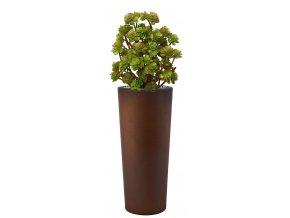 Echeveria Burly 110 cm Multicolor V5419M06