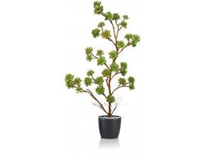 Echeveria Plant 80 cm Multicolor V5421M02