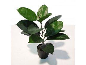 Ficus Elastica Bush 60 cm Green V5426001