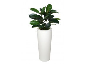 Ficus Elastica Bush 110 cm Green V5426008