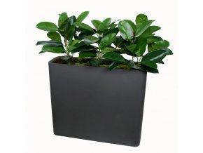 Ficus Elastica Fence 1 m lin h 110 cm Green V5426009