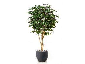Ficus Exotica Designer 220 cm Green V1049037