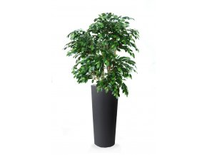 Ficus Exotica Lux 210 cm Green V1049024