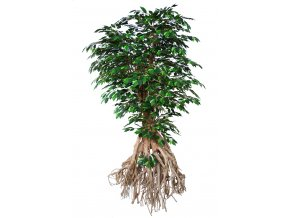 Ficus Exotica Root Giant 250 cm Green 1049054