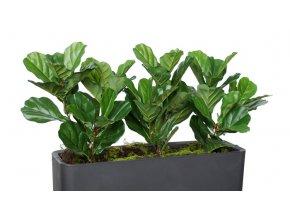 Ficus Lyrata Fence 120 cm Green V5427009