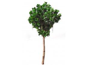Ficus Lyrata Gigantea cm 400 Green 5427010