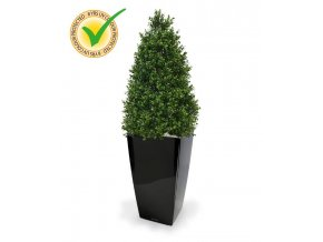 138511uv buxus tower 110 cubico 30 zwart 1