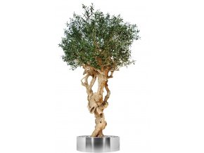 Olive Monolite 320 cm Green V1048036