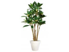 Plumeria Florida 240 cm Green Cream V1082002