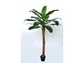 Banana Tree w pot 200 cm Green 5569GRN