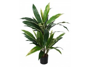 Cordyline Bush w pot 80 cm Green Yellow 5545GYE