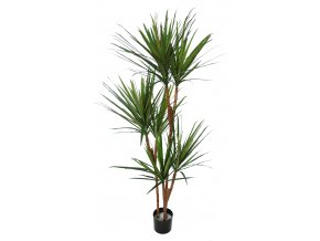 Dracaena Marginata Tree w pot 170 cm Green Red 5547GRD