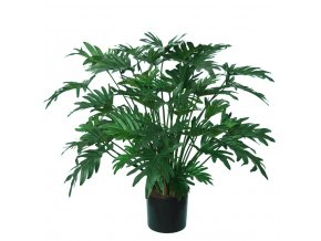 Philodendron Lux w pot 75 cm Green 5513GRN