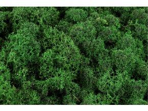 Lichen zeleny tmavy