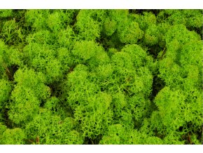 Lichen limetkove zeleny detail