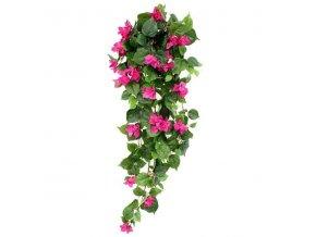 207410 bougainvillea hangplant 100cm paars