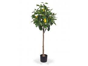 194112 citroenboom op stam 120