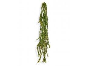 204506 asparagus foxtail hanger 60 groen
