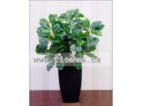 Prunus pflanze 40cm 1