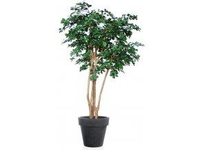 Buxifolia Florida 220 cm Green V1056020