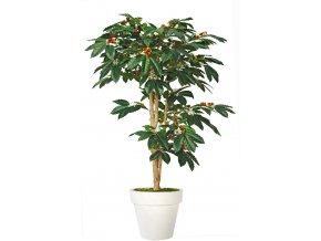 Coffee Florida Tree 150 cm Green V1077008
