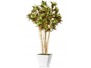 Croton Florida 250 cm Multicolor V5299009