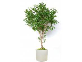 Gynkgo Florida 260 cm Green V1087001 (1)