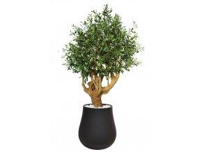 Olive UVR Robusta 220 cm Green V1085030
