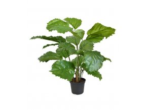 Umělá rostlina Tetrastigma (40cm)