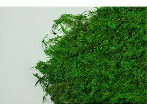 Fern moss A detail