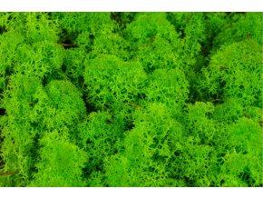 Lichen zeleny svetly detail