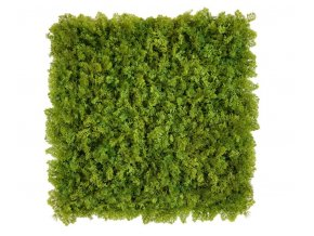 mos groen moswand 50x50cm mat Kunsthaagvoordeel