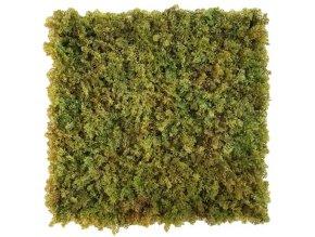 mos bruin moswand 50x50cm mat Kunsthaagvoordeel