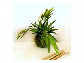mechová kokedama s umělou květinou - bambusové listy